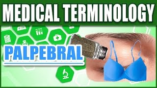 🔥 Medical Terms Made Easy - PALPEBRAL | Memorize Med Terminology for Beginners | Biology Words List