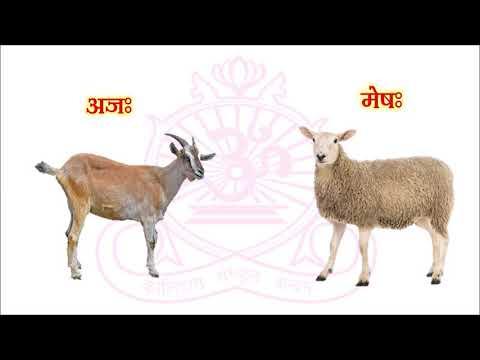 Sanskrit lesson 1 Domestic Animals