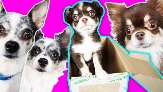 УСЫНОВИЛИ РЕБЕНКА? Что в посылке? Собаки вредные детки и посылка! А там щенок ? Magic Family
