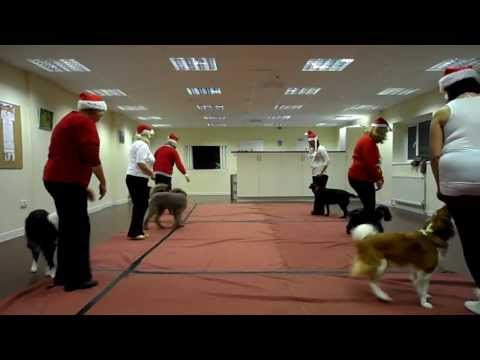 Video Dogs - Christmas 2013 - Purbeck Dog Dancing Group Routine