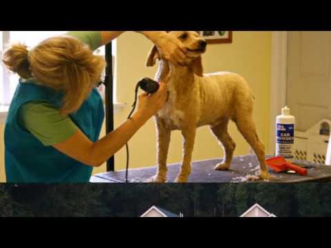 Dog Haircut | Gambrills, MD – Gambrills Veterinary Center