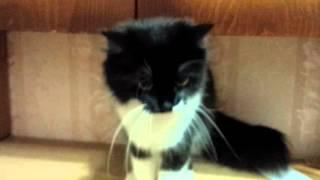 Отдай котенка!!!!Носит совсем маленького котенка