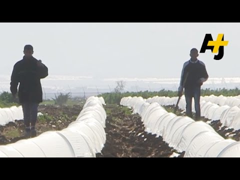 Child Labor On Israeli Farms Exposed