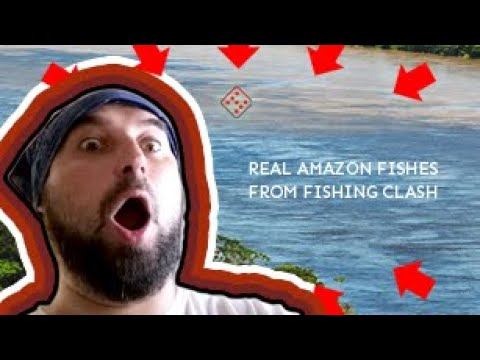 Fishing Clash - Amazon Fishes in Real Life. Compilation of Amazon Fishes You Can Catch in Game