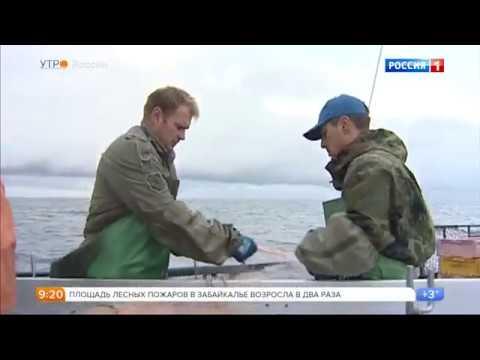 Рыбы Сибири Сибирская рыбалка