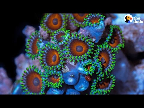 Climate Change Effects: Coral Reefs Are Dying Because Of Climate Change | The Dodo