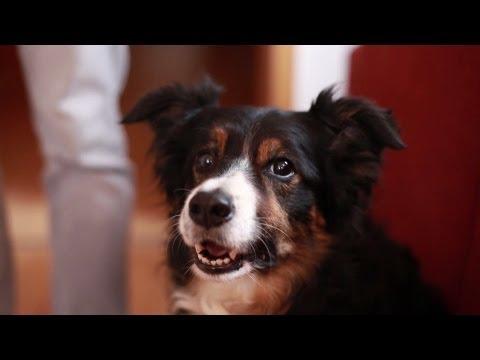 COP DOG - tragischer Tod eines Hundes!