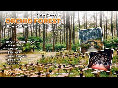 Wisata Orchid Forest Cikole | Lembang Bandung #destinasiid
