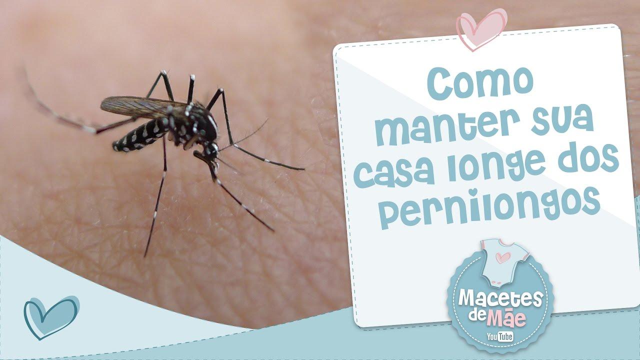 COMO MANTER A SUA CASA LONGE DOS MOSQUITOS E PERNILONGOS - MACETES ...