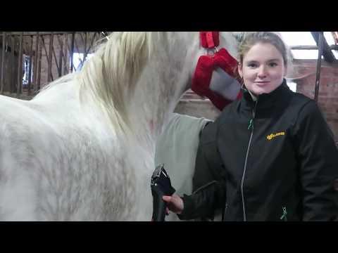[Deutscher Untertitel] How To: Das Pferd Scheren - Teil 1 | Epplejeck Reitsport