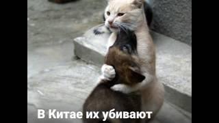 Бедные животные....в описании 😭