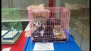 Забытые на выставке в Челябинске кошки
