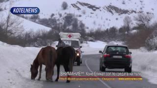 Безстопансвени коне посред пътя опасно ближат сол www.kotelnews.com