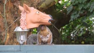 Squirrel With A Horse Head