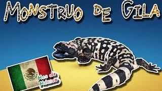 Monstruo de gila  El lagarto colorido y venenoso  (Animales del Mundo)  Mes de México 