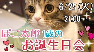 ぽこ太郎1歳のお誕生日会