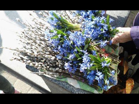 Первоцветы на продажу