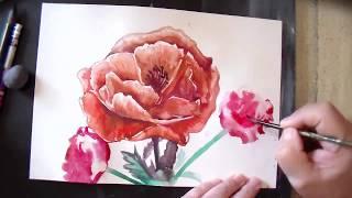 Как нарисовать маки акварелью поэтапно/How to draw a poppy in watercolor stage by stage