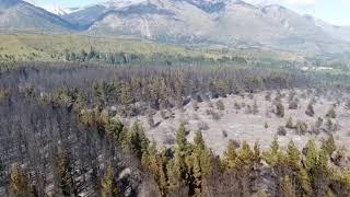 Incendios forestales: ya son 300 las hectareas afectadas