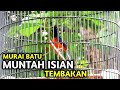 Murai Batu Full Isian Tembakan Panjang  Mp3 - Mp4 Download