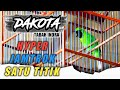 Cucak Hijau Dakota Milik Mr Tabah Tampil Hyper Auto Juara   Mp3 - Mp4 Download
