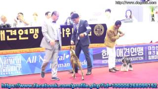 2016.06.19 SEOUL FCI INTERNATIONAL DOG SHOW & AKU CHAMPIONSHIP DOG ...