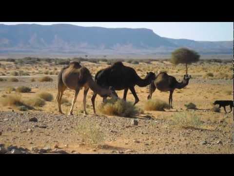 Desert Sahara Morocco - Ouzina one of the Treasures of South Morocco