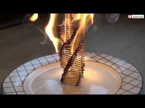 Thumbnail: Fire Domino Effect | Matches Arranged to D N A Double Helix | 火多米诺效应较量布置以DNA双螺旋结构