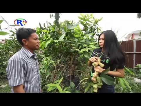 jambu madu Pekanbaru +6281371015202 Part2