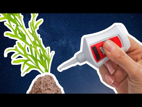 How To Aquascape With Super Glue – 8 Tips