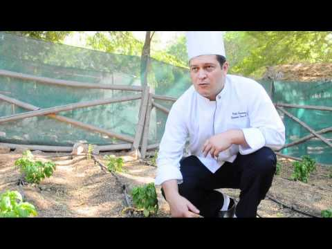 Pablo Fernadez -- Executive Sous Chef of Jebel Ali Resort