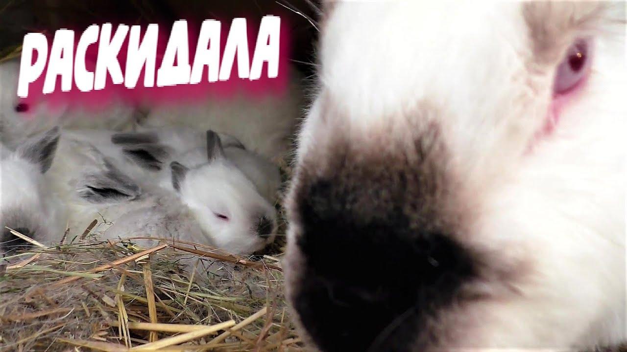 Запой кроликов алкоголизм лечение вывод