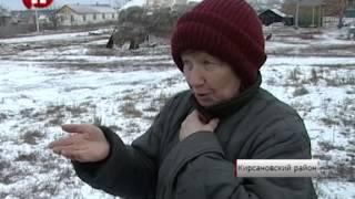 Жители Кирсановского района пожаловались губернатору на количество бездомных собак /НВ - Тамбов/