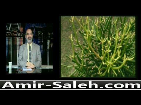 علاج الزوائد الجلدية بإستخدام صبار القلم الرصاص أو صبار الشمعدان | الدكتور أمير صالح