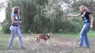 Dog Training Toy For Large And Medium Dog Breeds