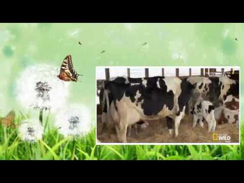 The Incredible Dr  Pol   Season 9 Episode 3   Flip 'N Stitch