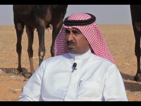 لقاء خاص.. الشيخ عبدالهادي بن علي أبوليله المري - مالك إبل