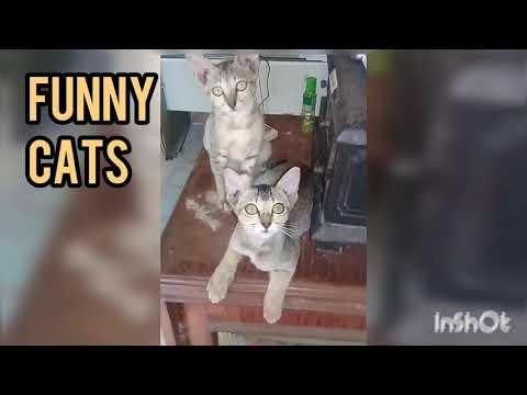 Funny Cats/ Kucing yang  lucu