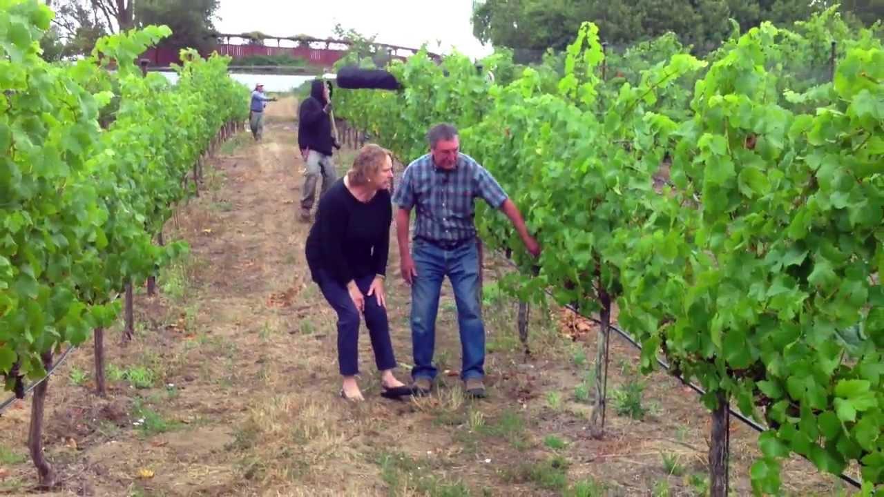 In The Vineyard | Bird Netting | Libarle Vineyard