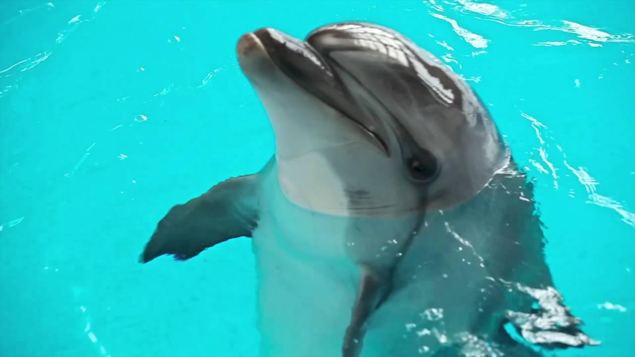 Картинки по запросу казань дельфины
