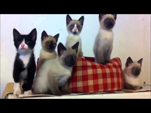 Cute cats - Little kittens meowing and talking - Cute cat compilation