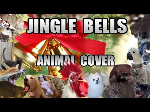 Jingle Bells (All Star Animal Cover)