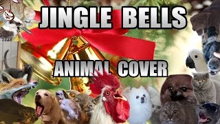 Baixar Jingle Bells (All Star Animal Cover)