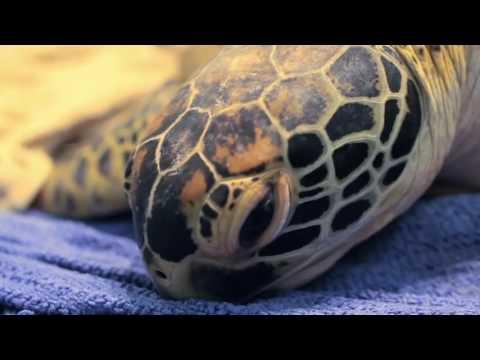 Save the Turtles - Turtle Rehabilitation Centre, Fitzroy Island