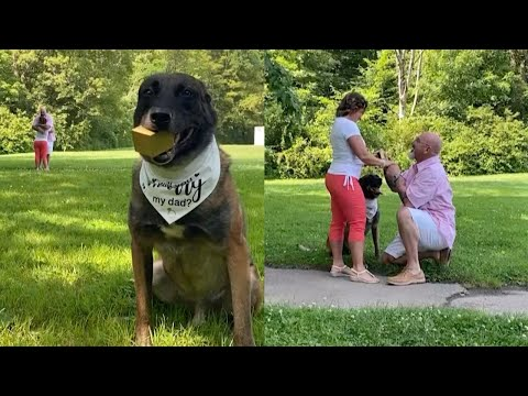 Adorable Dog Helps His Owner Propose