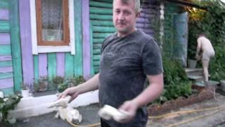 Как запекать шашлыки в \