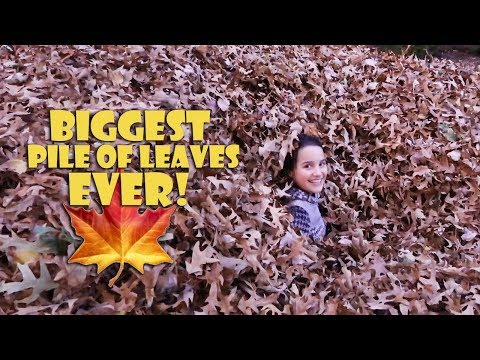 Biggest Pile of Leaves Ever 🍁 (WK 359.7) | Bratayley