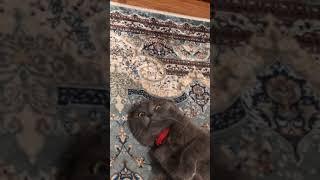 Что будет, если накурить кота 😂