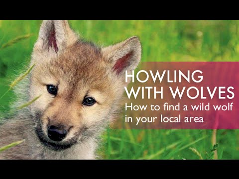 How to Talk To Wolves - At the NY Wolf Conservation Center