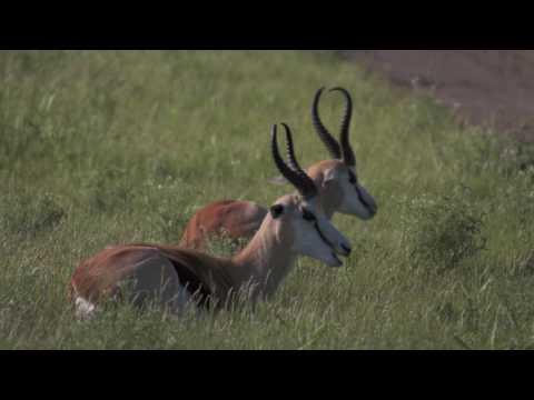 Narrow Runways and Deep Holes   Botswana